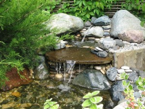 дизайн водоема пруда